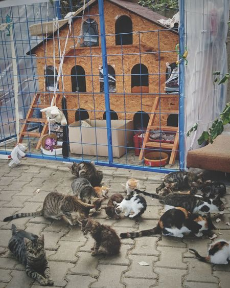 Stray Animal Cat House Cat Window Architecture Building Exterior Built Structure