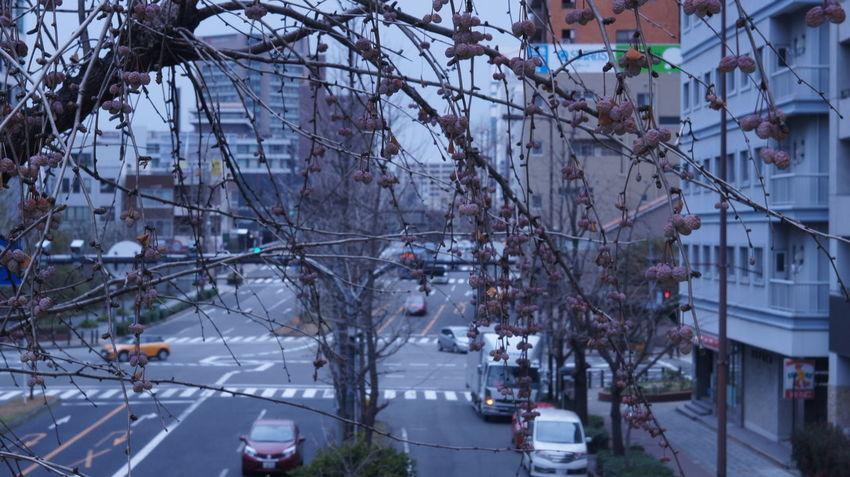 Winter City Day Nex5 Streetphotograhy Industar-50 3,5/50 INDUSTAR Vintage Lens Cityscape