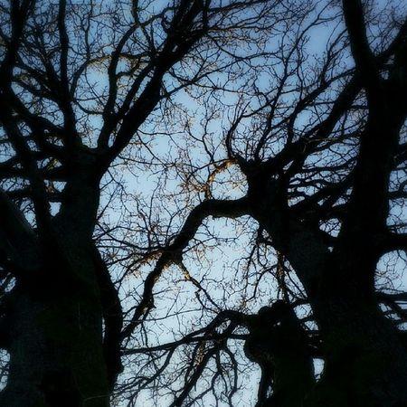 Treescollection Rsa_light Rsa_dark Rsa_tree ic_tree rsa_nature ic_nature droidedit frameable fpog instanaturefriends igersgothenburg igers slottskogen majorna gothenburg wu_sweden