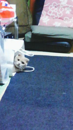 実家にて。 紙袋からこんにちわ。?On A Holiday Holiday Hello World My Cat Cat とっちゃん
