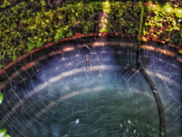 Water Nature No People Day Close-up Outdoors Beauty In Nature Freshness Spiderweb Spider Web Inside Well  Colours Blue Green Light Forest Smartphonephotography J7camera J7