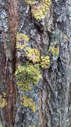 дерево Modern