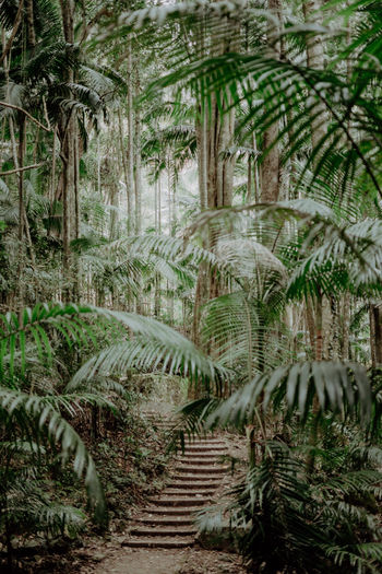 Jungle path Animal Wildlife Architecture Beauty In Nature Coconut Palm Tree Day Environment Footpath Forest Green Color Growth Land Nature No People Outdoors Palm Leaf Palm Tree Path In Nature Plant Plantation Scenics - Nature Tranquil Scene Tranquility Tree Tropical Climate