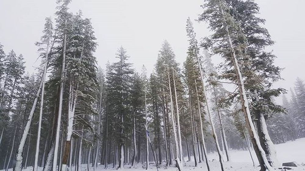 Lost in the world ... Snow Youarebeautiful Coldbreeze Cold Freshsnow