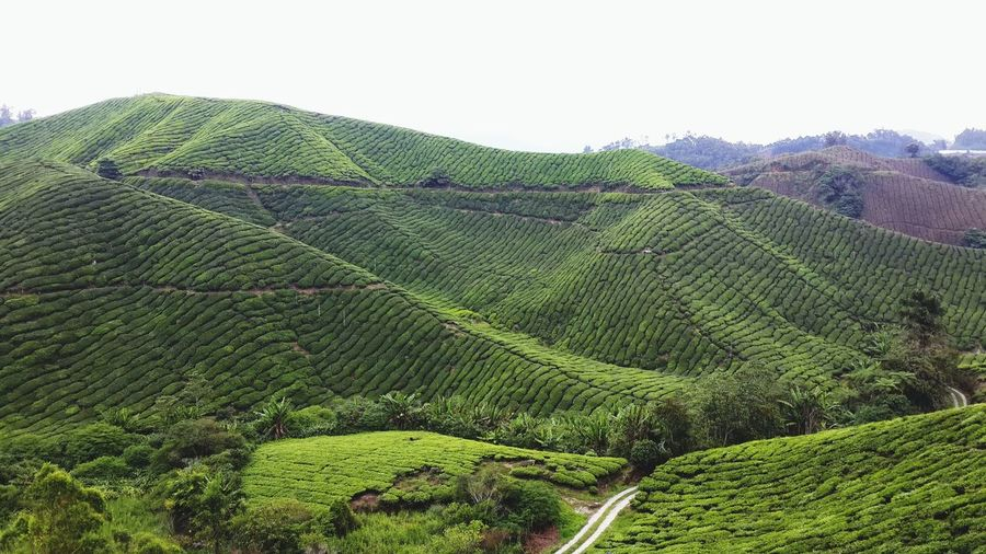 Farm view at Cameron Highland. GreenFarm Green Farm Cameronhighland Tripwithfriends Bff Ejken7