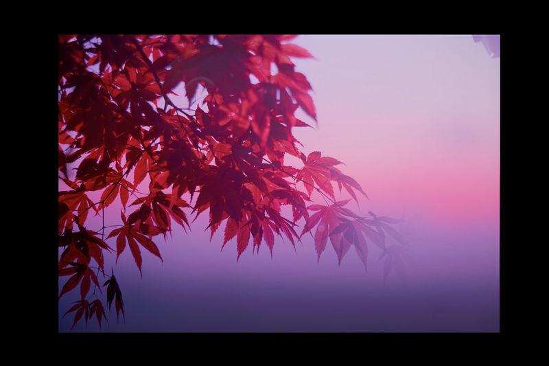 Twilight Autumn Leaves Film Filmphotography Fujifilm Japan Nature Nature Photography Reversalfilm Velvia100 EyeEmNewHere The Great Outdoors - 2017 EyeEm Awards