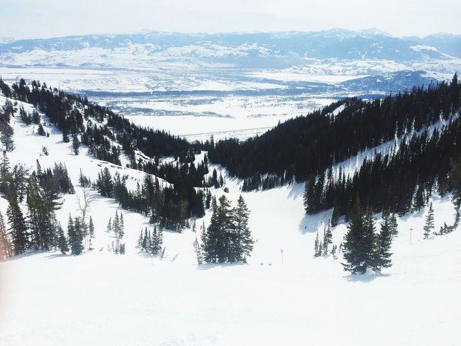 Mountains Powder Shred Life