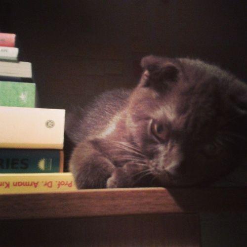 yoda ile bir gece... Yoda Masteryodasunar Catstagram Cat