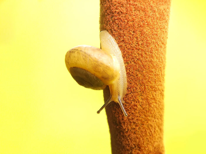 snail, snail on the branch with a yellow background Insect Close-up Animal Themes Bee Dragonfly Honey Bee Arthropod Animal Antenna Honeycomb Praying Mantis Animal Wing Bumblebee Pollination Spider Symbiotic Relationship Damselfly Butterfly - Insect Wasp Spider Web Jumping Spider Buzzing Web APIculture Beehive Arachnid Grasshopper Cocoon Invertebrate Moth Ant