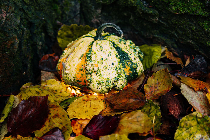 Autumn Change Close-up Day Focus On Foreground Food Food And Drink Freshness Fruit Green Color Healthy Eating Leaf Leaves Moss Nature No People Outdoors Plant Plant Part Pumpkin Rotting