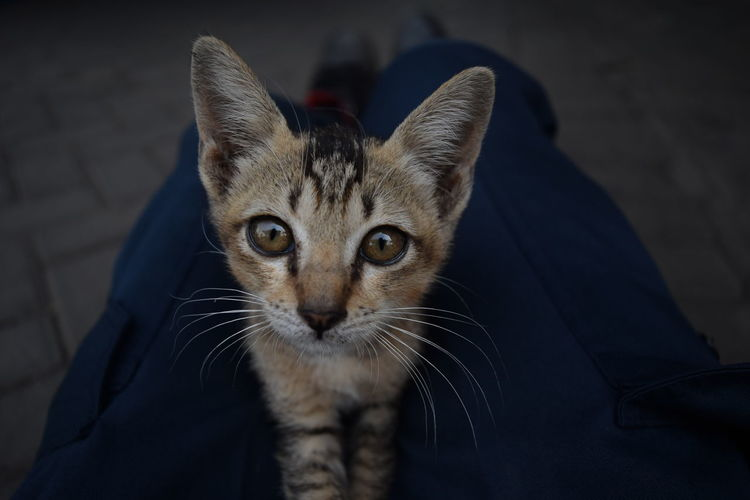Kucing_street