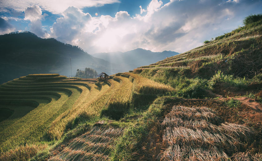 Terraced rice field at Sapa, Vietnam Terrace Field Land Landscape Mountain Mountain Sapa Mu Cang Chai Nature No People Outdoors Rice Sapa Sa Pa Sapa Vietnam Scenics - Nature Terraced Fields Terraced Houses Terraced Rice Terraced Rice Fields Terraced Sapa Tranquil Scene The Traveler - 2018 EyeEm Awards