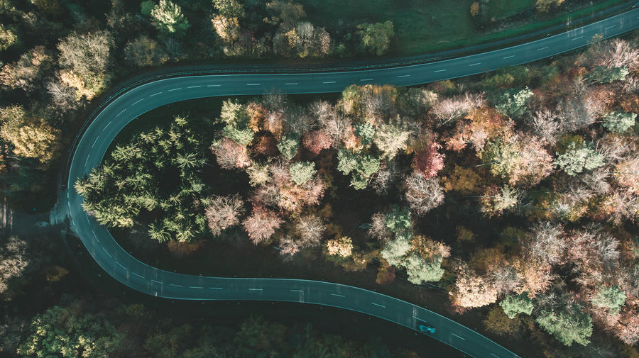 High angle view of trees with a road