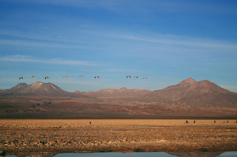 Birds flying over mountains against sky