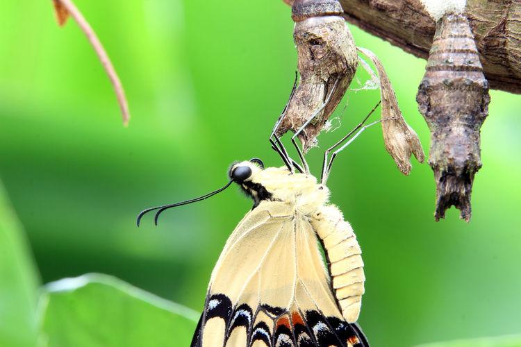 Animals Animals In The Wild Animals Live Beauty In Nature Beauty In Nature Insect Nature One Animal