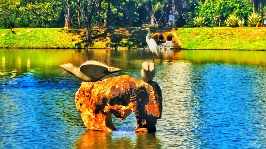 Bird Photography Goiânia Brazil Daylight Lake View Awesomeness EyeEm Best Shots EyeEm Brasil Sunlight Awesome Picture Snapseed Awesome Goiânia Sunny Day Park