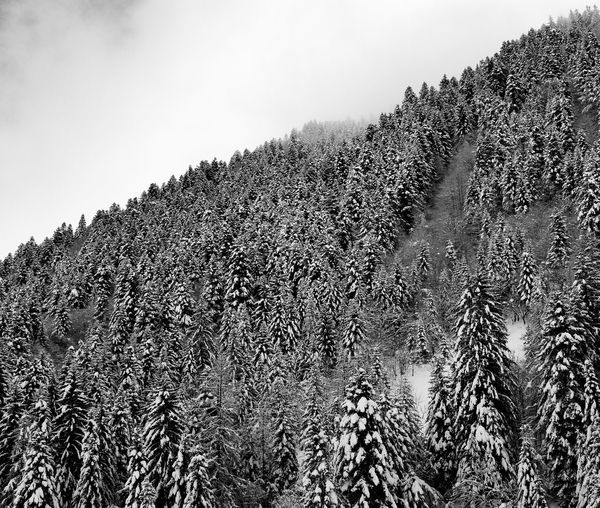 Snow-covered forest in the Piedmontese Alps (Piedmont, Italy) Snowcapped Mountain Snow Snowing Plant Sky Tree Tranquility Beauty In Nature Mountain Cold Temperature Outdoors Pine Tree Mountain Peak Coniferous Tree Landscape Non-urban Scene Winter Environment Scenics - Nature Tranquil Scene Nature Forest Growth Piemonte Italy