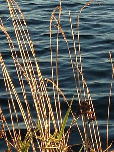Winter grass. In Ortenberg Germany Lake Rippled High Angle View Tranquility Beauty In Nature