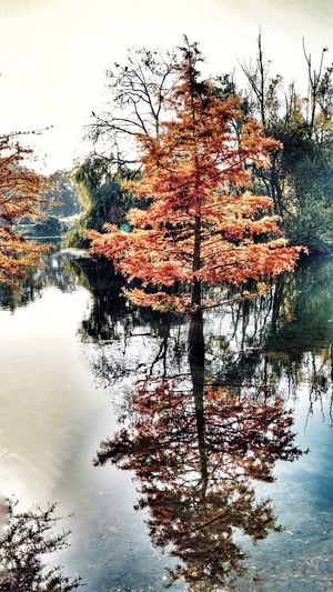 The tree in the the mirror Reflection Nature Tree Water Tranquility No People Sky Scenics Beauty In Nature Day Outdoors Lake