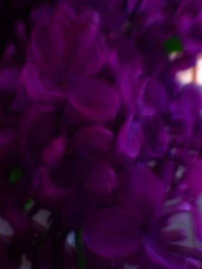 Macro Flower Keep It Blury The Color Purple