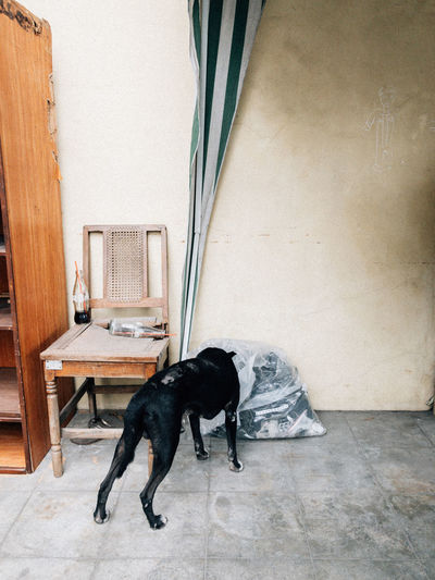 View of a dog on floor