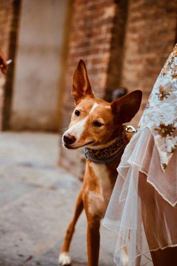 Portrait of a dog turning head