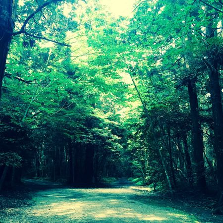 Nature On Your Doorstep Nature Beautiful Nature Japan Forest Trees