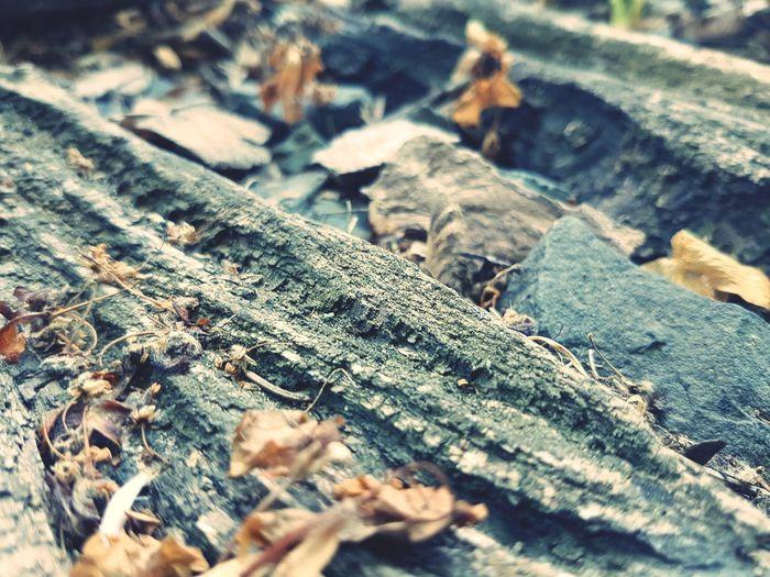 Train Station Close-up Deforestation Woodpile Tree Stump Ant Tree Ring Environmental Damage