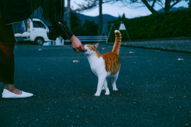 Cropped hand of woman feeding to cat on street