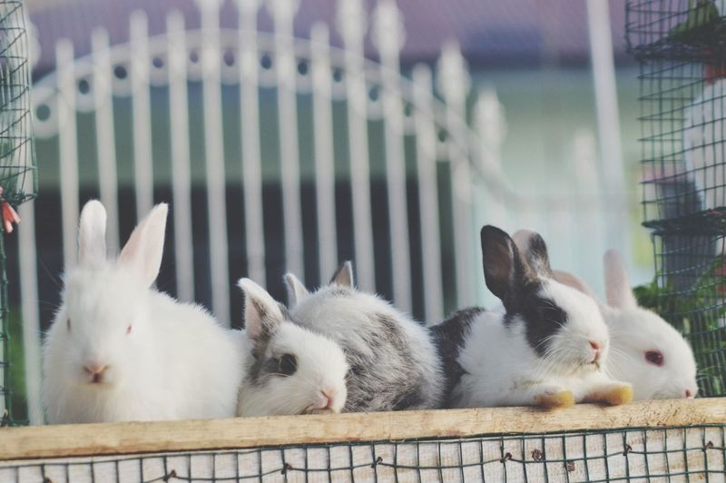 Rabbits relaxing on cage