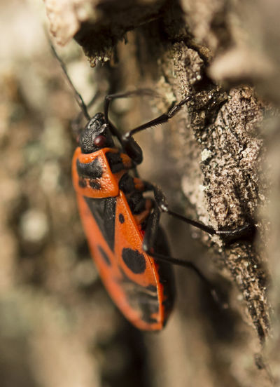 Bichos Bugs Chinche Insect Insectos Macro Nature Macro Photography Outdoors