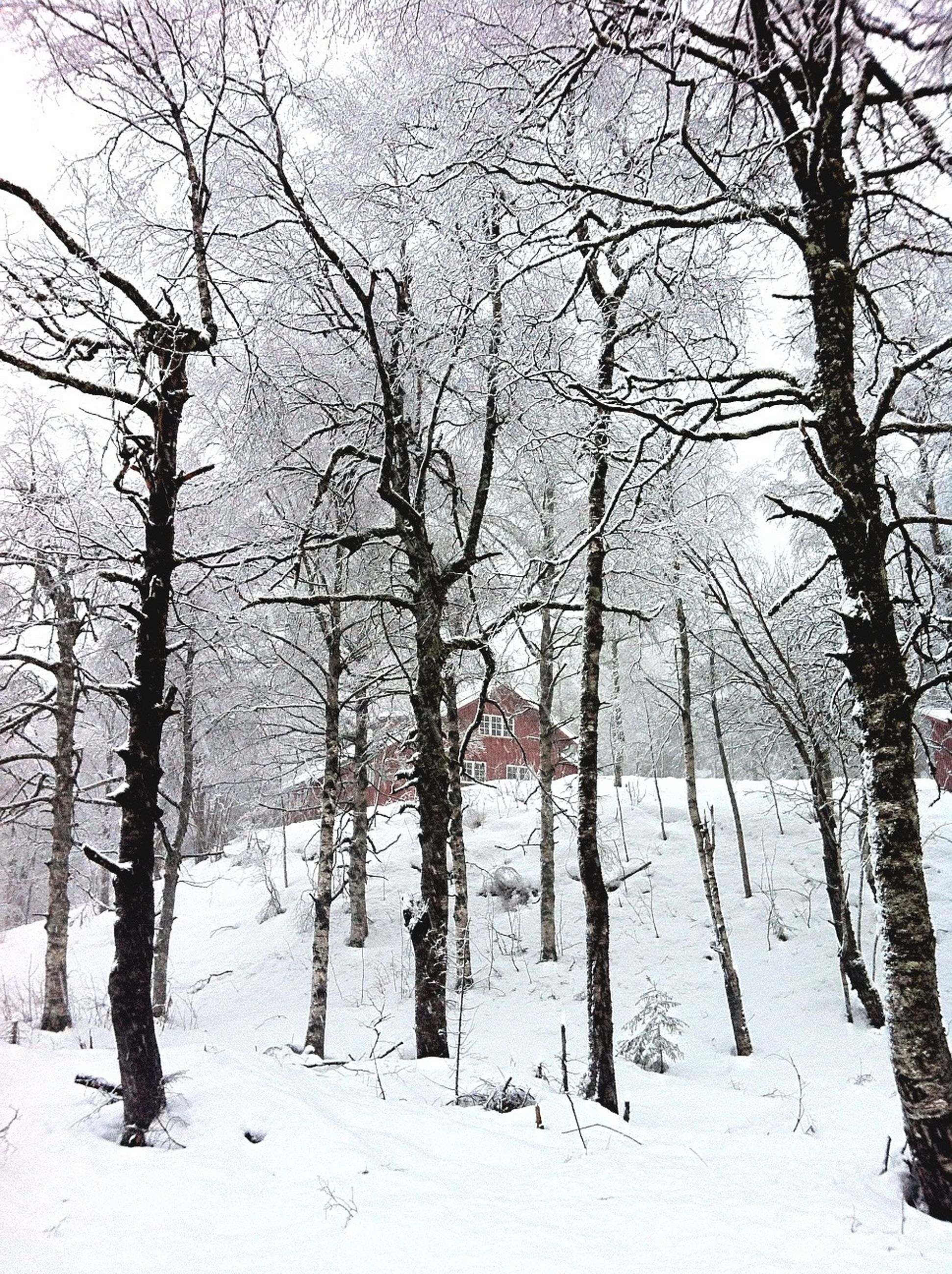 snow, winter, cold temperature, season, bare tree, weather, tree, tranquility, covering, landscape, tranquil scene, nature, tree trunk, field, branch, white color, frozen, beauty in nature, snow covered, cold