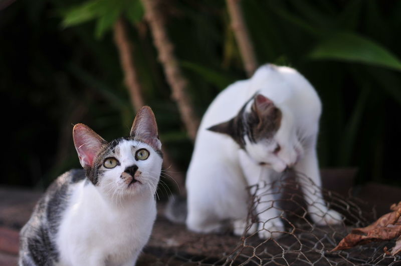 Portrait of white cat with kitten