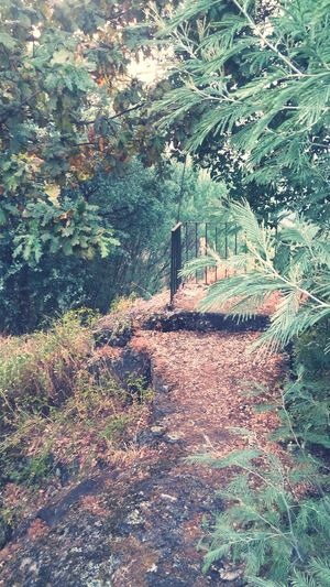Pathway Path In Nature Relaxing Nature Photography EyeEm Nature Lovers EyeEm Best Shots EyeEm Best Shots - Nature Misterious Look Balcony View Cruziper Photography