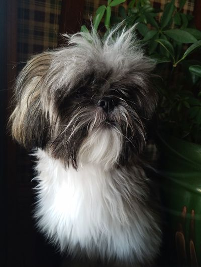 Dog Pets One Animal Domestic Animals Animal Hair Animal Themes Mammal Close-up Portrait Indoors