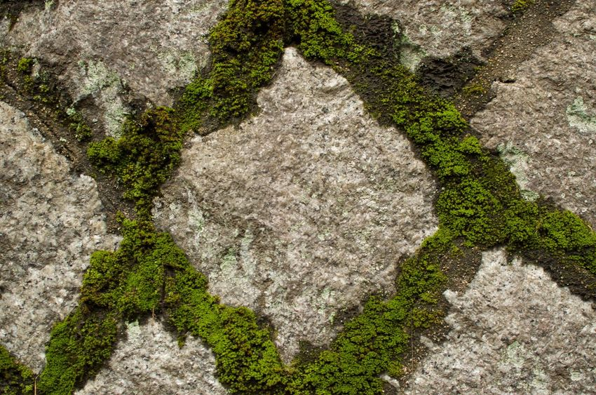 Moss grows between diamond shaped stones in Kyoto, Japan Nature No People Textured  Rock - Object Architecture Backgrounds Full Frame Moss Granite Close-up Diamond Shaped
