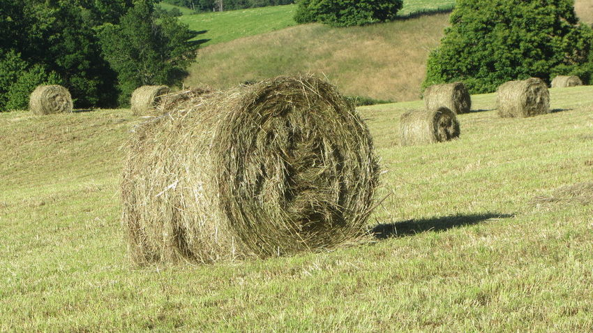 GR65 Via Podiensis Agriculture Bale  Beauty In Nature Day Farm Field Grass Hay Hay Bale Haystack Landscape Nature No People Outdoors Rolled Up Rural Scene Tranquil Scene Tranquility Tree