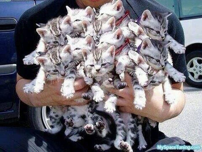 Hello World Cat♡ Enjoying Life Hi!