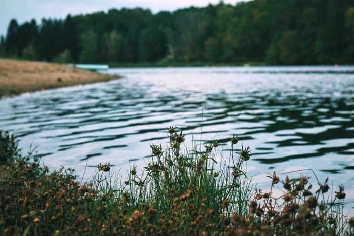 Photography Water Lake Plant Growth Scenics Nature Tranquil Scene Grass Tranquility Beauty In Nature Forest Focus On Foreground Rippled Non-urban Scene Day Majestic Green Color Freshness Green Wetland EyeEm EyeEm Nature Lover