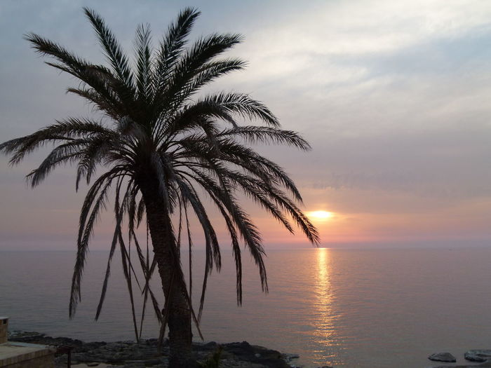 Water Sky Sunset Tropical Climate Palm Tree Beauty In Nature Sea Scenics - Nature Tranquil Scene Tranquility Tree Horizon Over Water Nature Horizon Idyllic Plant No People Cloud - Sky Silhouette Outdoors Palm Leaf