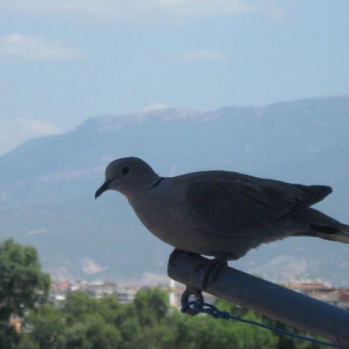 Like Bird Uçmak Ozgurluktur izmir
