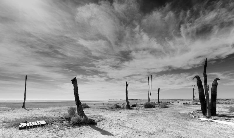 Beauty In Nature Cloud - Sky Dead Tree Landscape Nature No People Outdoors Salton Sea Scenics Sky Tranquil Scene Tranquility