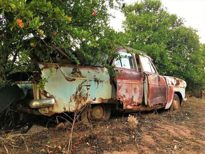 Abandoned Bad Condition Car Countryside Damaged EyeEm EyeEm Best Shots Eyem Farm Ford Ford Zephyr Hello World Land Vehicle Mode Of Transport No People Obsolete Old Car Old-fashioned Orchard Outdoors Retired Rural Scene Rusty Transportation Tree