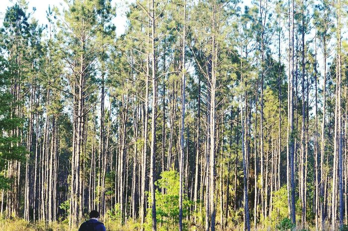 Taking Photos Check This Out Photogra-tree Portrait Of A Friend