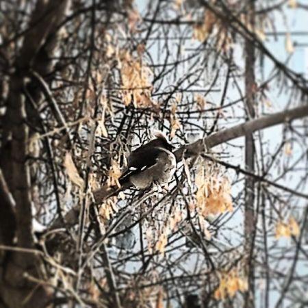птичк за окном ))) Bird Winter Mywindow Nature pickoftheday