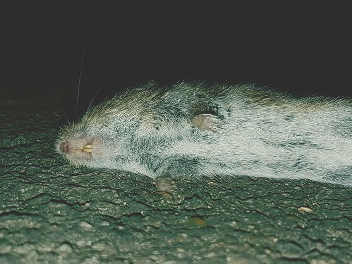 Close-up Animal Themes No People Naughty Cat Dead Animal Cat Present Dead Mouse Outdoors
