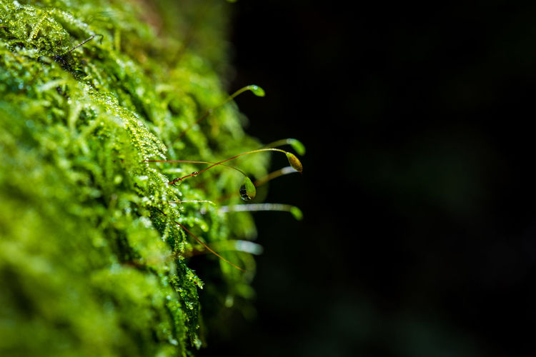 Close up green