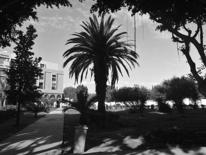 Agadir Palm Tree Gougin Outdoors No People