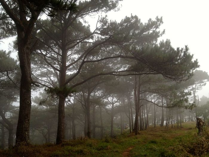Beauty In Nature Branch Day Fog Foggy Trees Forest Growth Landscape Nature No People Outdoors Pine Trees By The Beach Scenics Sky Tranquil Scene Tranquility Tree Tree Trunk