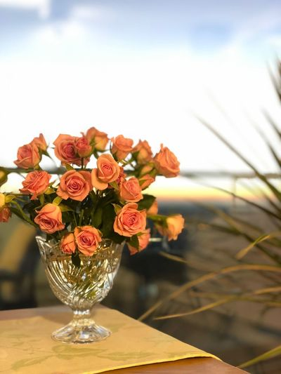 Rose Flowering Plant Flower Freshness Plant Nature Fragility No People Vase Beauty In Nature Table Decoration Glass - Material Flower Arrangement Flower Head